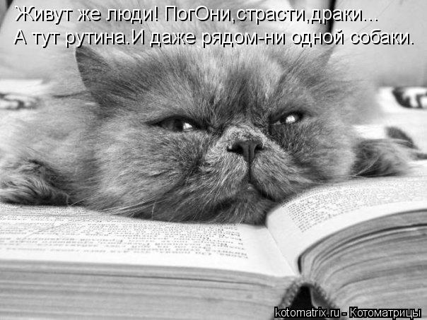 kotomatritsa_He (604x453, 136Kb)