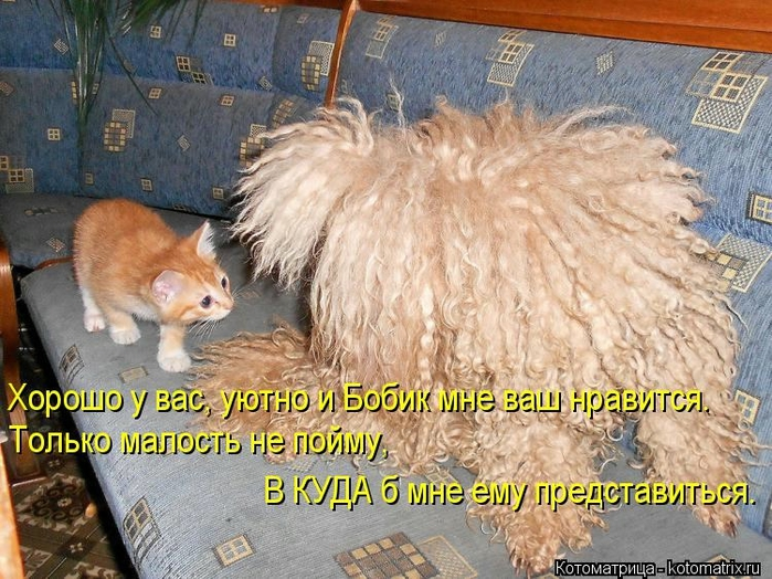 kotomatritsa_k (700x524, 335Kb)