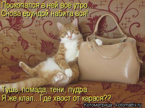 kotomatritsa_ns (500x375, 117Kb)