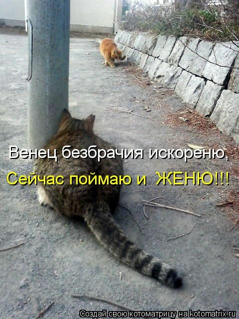 kotomatritsa_R0 (480x640, 190Kb)
