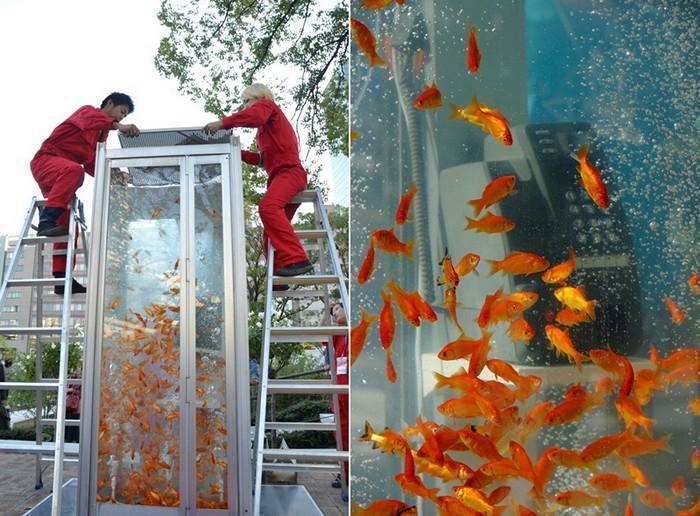 уличные аквариумы с золотыми рыбками япония (700x516, 418Kb)