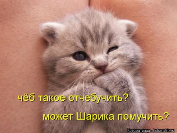 101564223_1370038472_1369975483_kotomau7 - копия - копия (570x427, 60Kb)