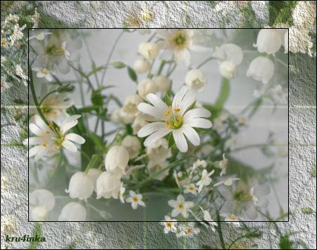Белые-цветы (450x356, 332Kb)