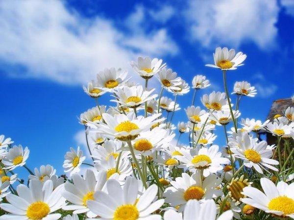 Самые красивые цветы полевые фото