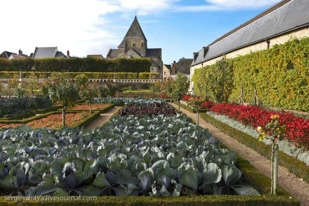 Сады замка Вилландри 5 (625x418, 194Kb)