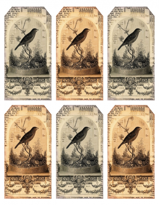 4435712_Bird_under_cloche_tags__lilacnlavender (540x700, 358Kb)