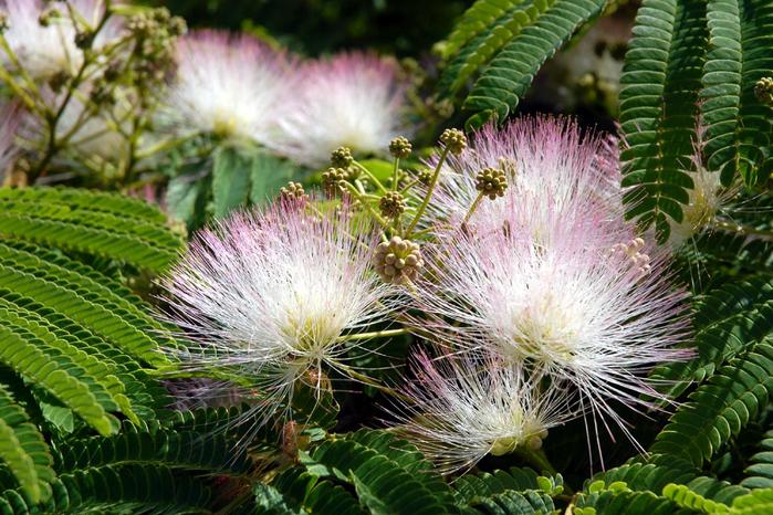 1284637886_flowers-1-40 (700x466, 479Kb)