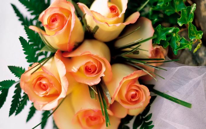 Обои Цветы, розы для рабочего стола - картинка #13994, скачать бесплатно на WallBox.ru