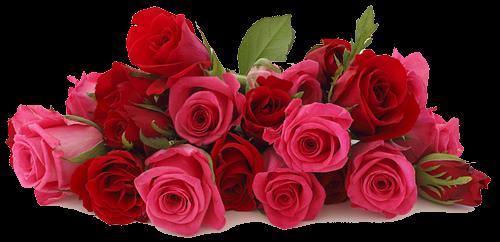 роскош розы. (500x242, 229Kb)