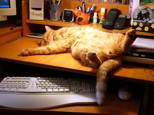 смешные фото кошек 2 (540x405, 145Kb)