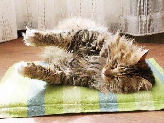 смешные фото кошек 4 (540x405, 149Kb)