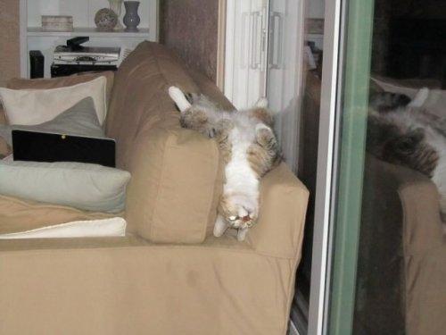смешные фото кошек 10 (500x375, 71Kb)