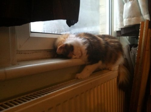 смешные фото кошек 14 (500x372, 73Kb)