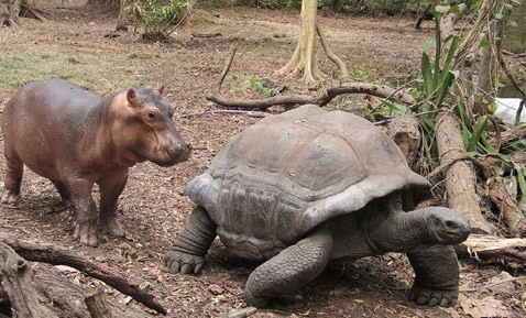 невероятная дружба животных фото (478x289, 151Kb)