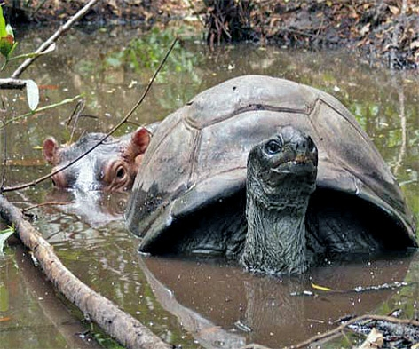 невероятная дружба животных фото 4 (472x393, 171Kb)