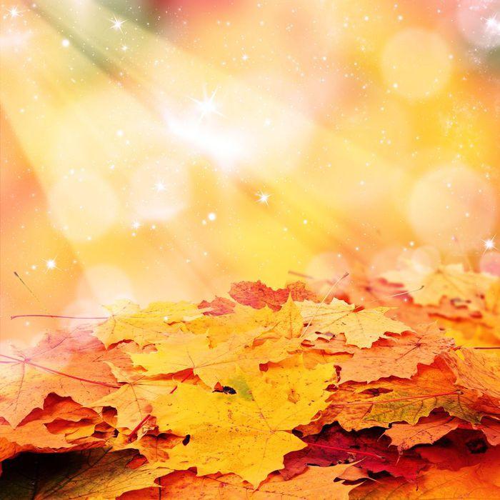 Серия сообщений осень