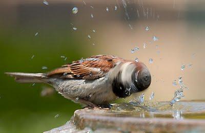 птиц (400x260, 74Kb)