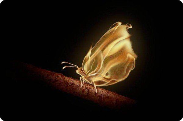 бабочка летит на огонь (600x397, 81Kb)