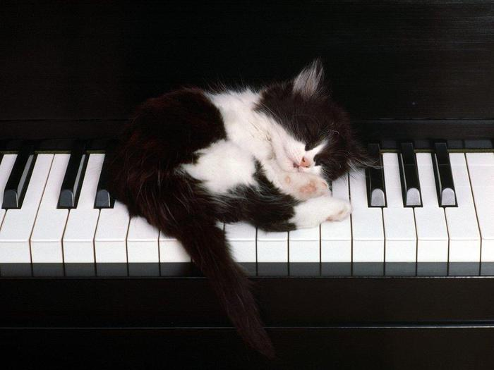 black_and_white_kitty_on_piano (700x525, 33Kb)