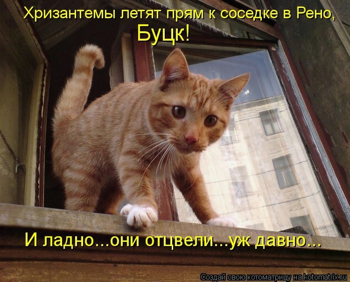 kotomatritsa__8 (700x563, 300Kb)