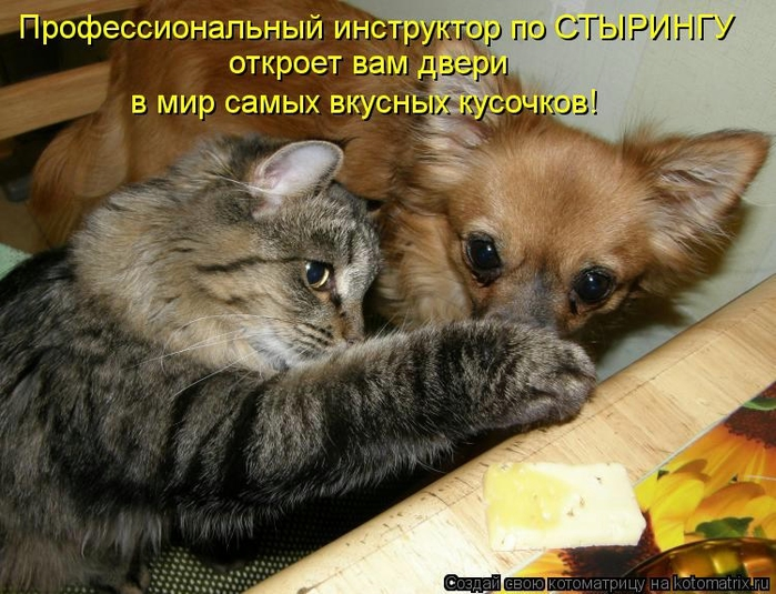 kotomatritsa_3 (700x535, 296Kb)