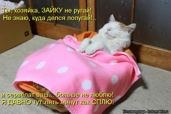kotomatritsa_g0 (700x466, 219Kb)