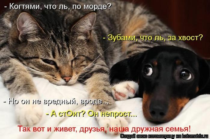 kotomatritsa_Kj (700x464, 228Kb)