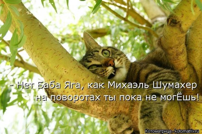 kotomatritsa_nP (700x467, 265Kb)
