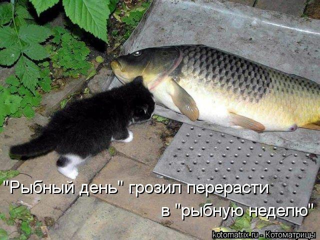 kotomatritsa_pk (640x480, 189Kb)