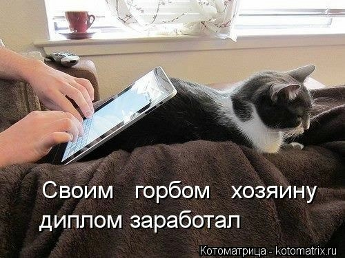 kotomatritsa_wF (500x375, 121Kb)