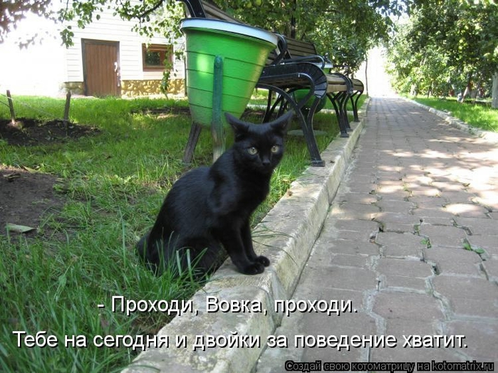 kotomatritsa_yG (700x524, 311Kb)