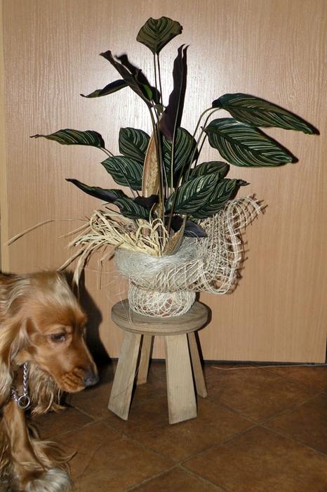Флористический декор. Очень красивые идеи! (69) (466x700, 254Kb)