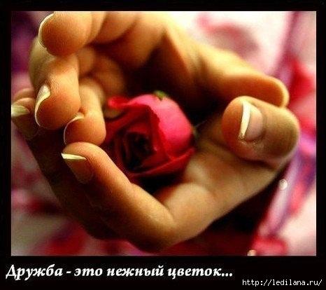 3925311_Beregite_dryjby_1_ (466x414, 89Kb)