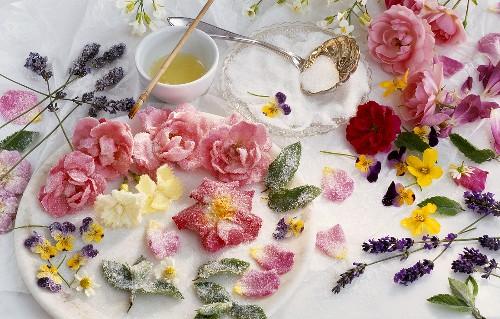Как приготовить засахаренные цветы/2565092_zasaharennie_cveti (500x319, 74Kb)