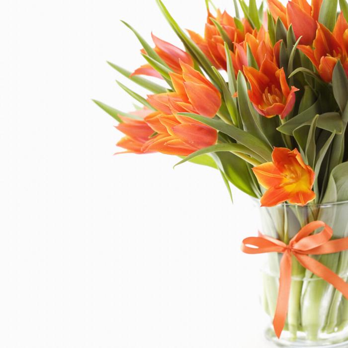 оранжевые цветы фото:
