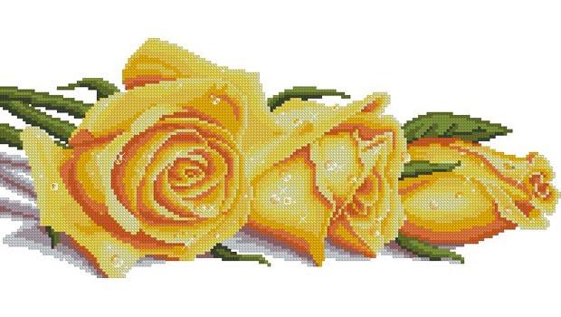 розы- (620x350, 64Kb)