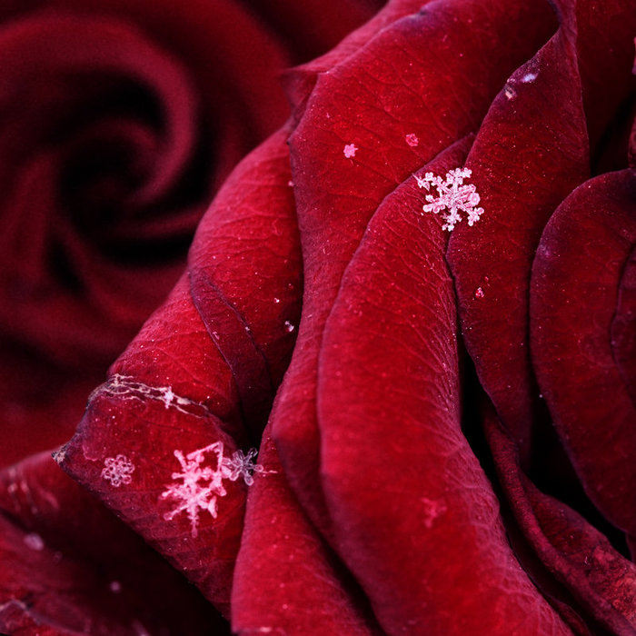5148030_First_snowflakes_with_love_by_Floriandra (700x700, 103Kb)