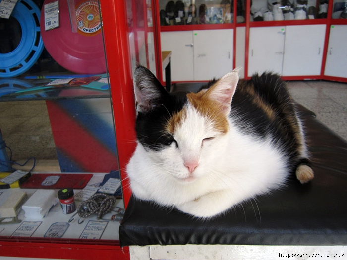 кошка в магазине (1) (700x525, 251Kb)
