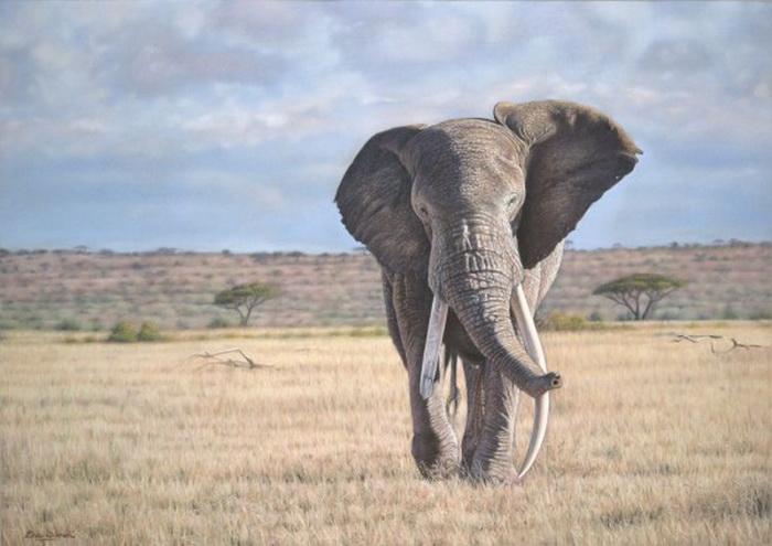Eric-Wilson-wildlife-1 (700x495, 99Kb)