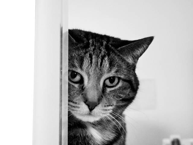 Animals_Cats_NIce_cat_027568_29 (640x480, 69Kb)