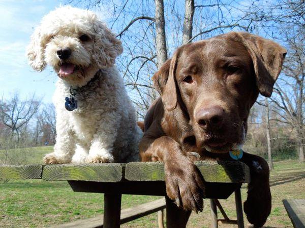 собаки 11 (600x450, 268Kb)