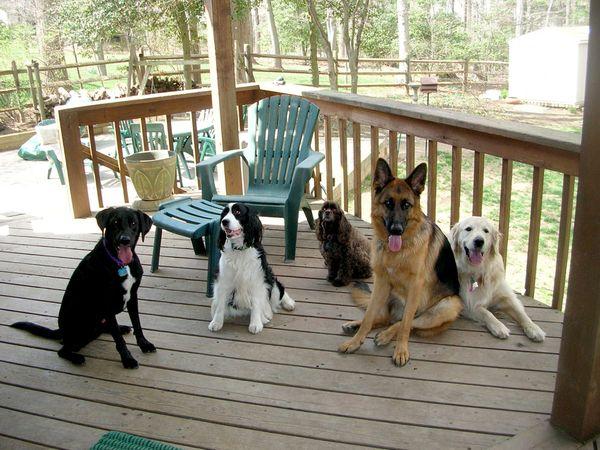 собаки 15 (600x450, 271Kb)