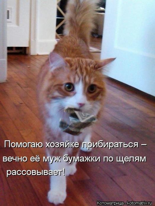 kotomatritsa_jg (524x700, 223Kb)