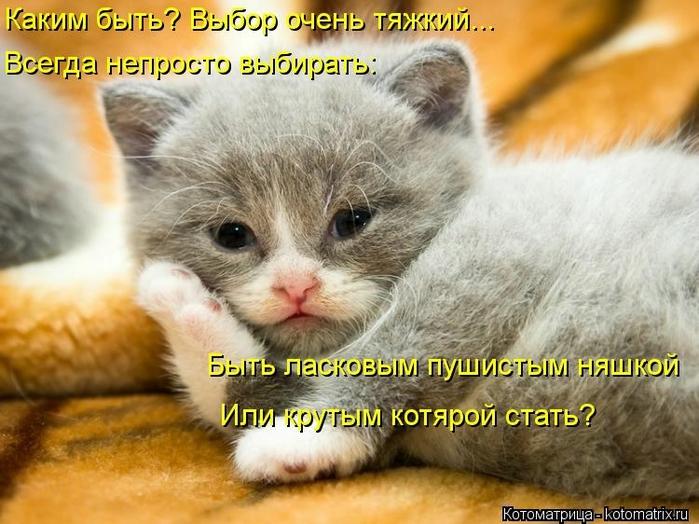kotomatritsa_kg (700x524, 273Kb)