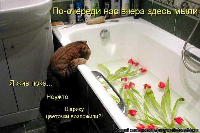 kotomatritsa_Wj (700x463, 201Kb)
