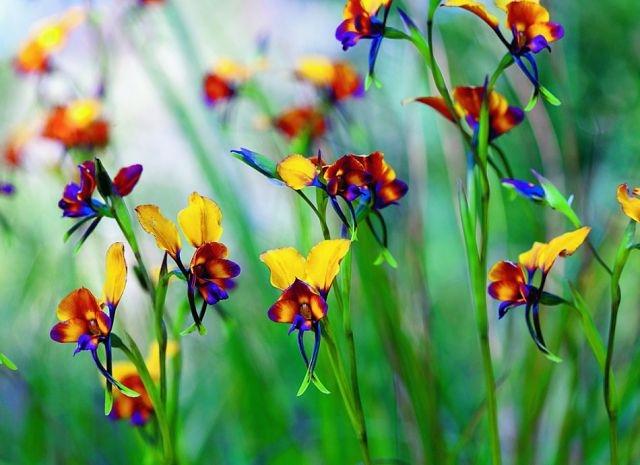 Таких орхидей Вы еще не видели2 (640x465, 156Kb)