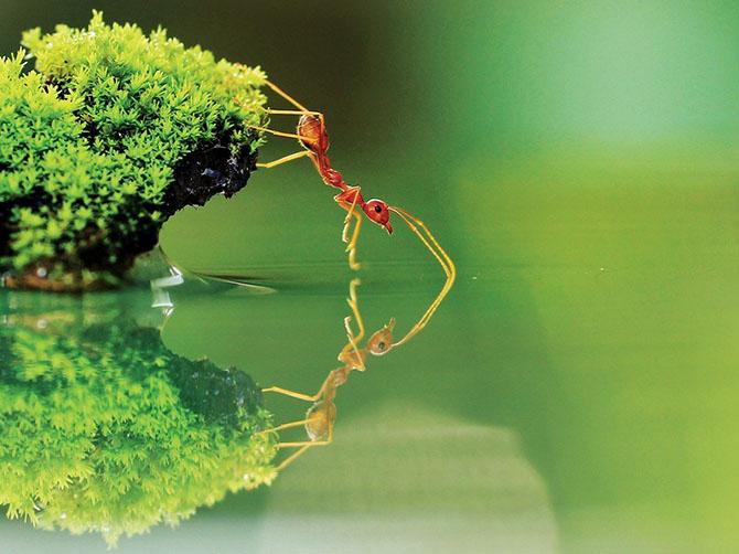 муравей (670x502, 248Kb)