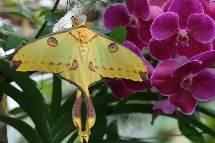 самая красивая бабочка фото 1 (700x466, 360Kb)
