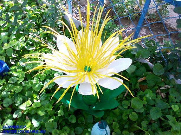 цветы из бутылок фото: