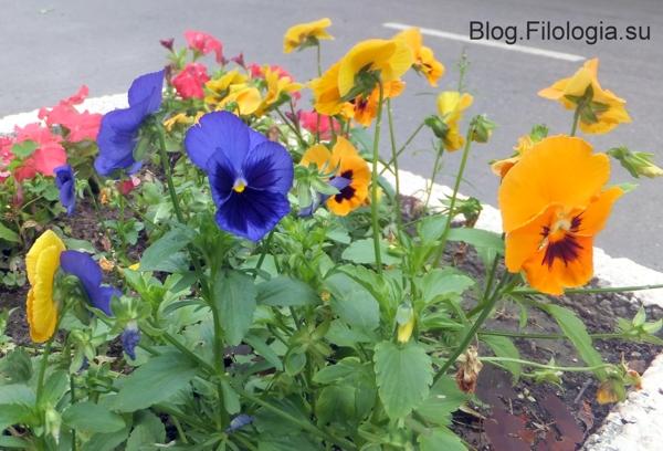 фото цветов/3241858_leto13 (600x408, 214Kb)